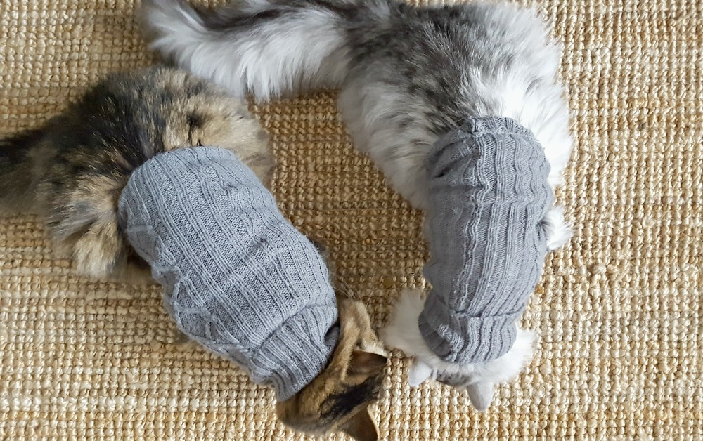 Chandail DIY pour chat ou chien / wooloo