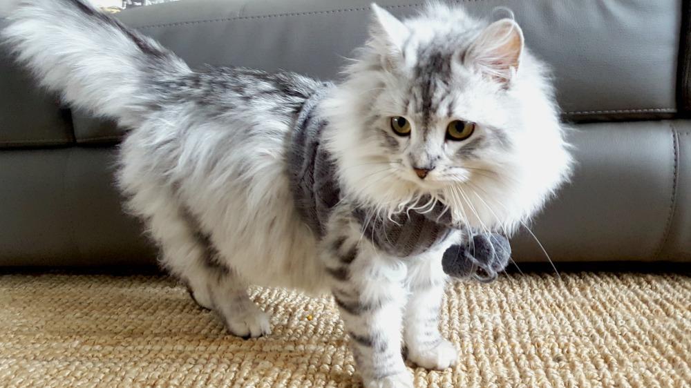 Chandail DIY pour chat ou chien