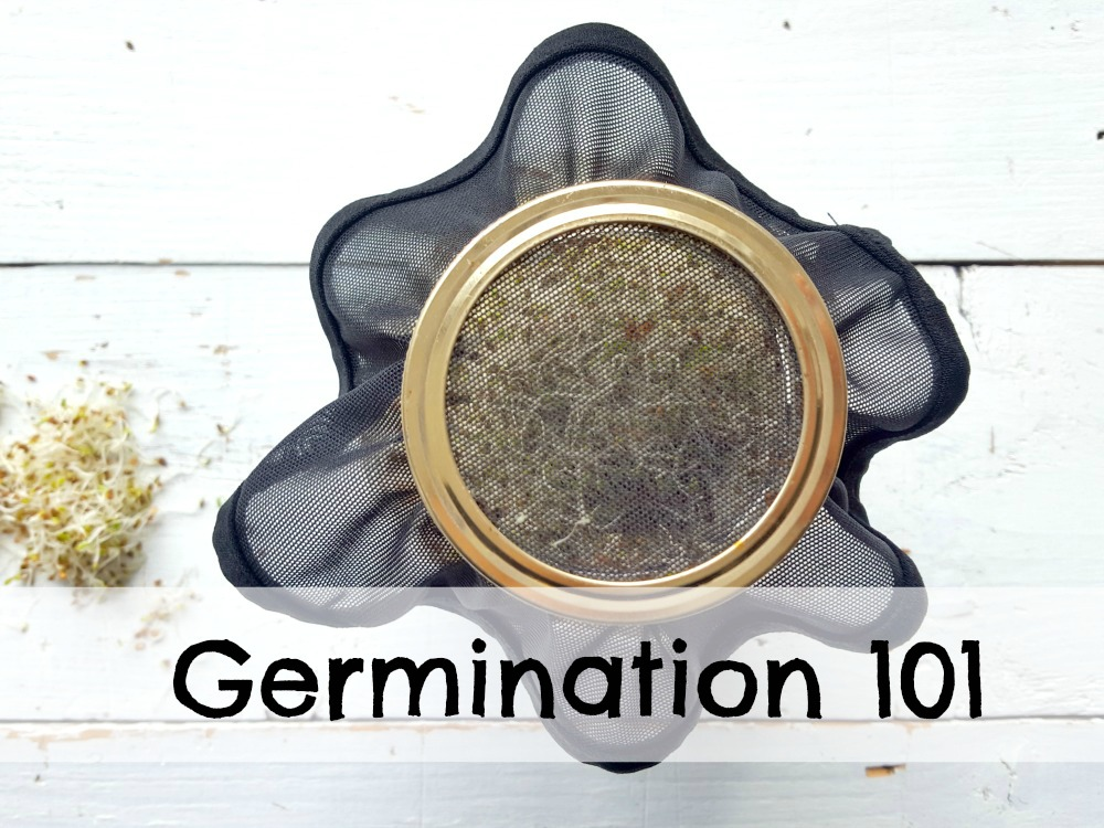 Faire germer ses graines facilement