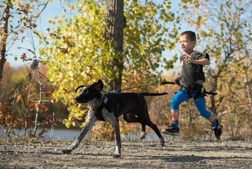 Courir en famille, avec le chien! – Canicross