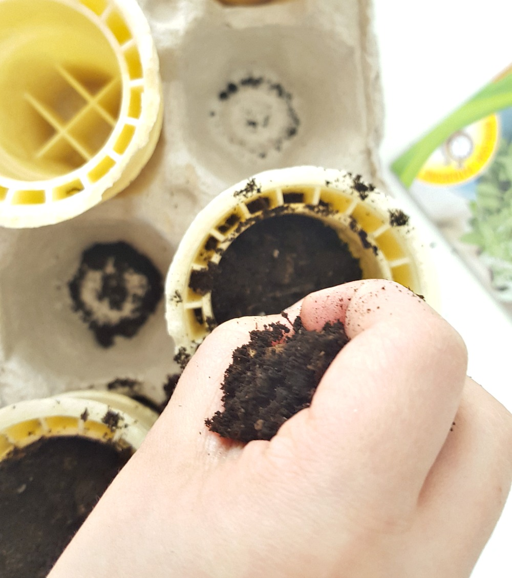semences-plantes-cornet-wooloo